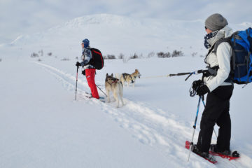 husky-trekking-header